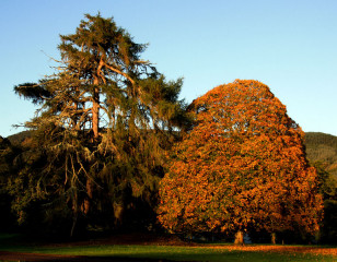 Aldourie Parkland in Autumn