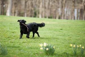 loch ness lizzie aldourie castle dog