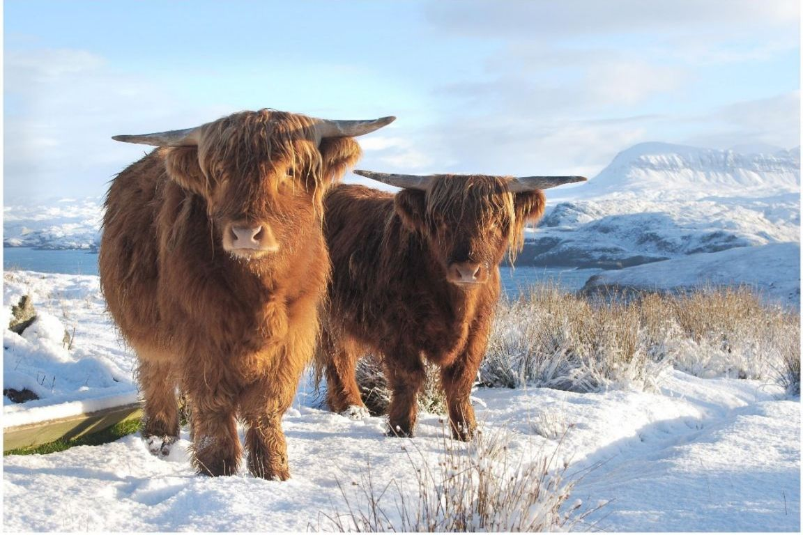 highlands winter