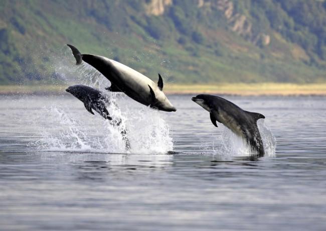 Dolphins Scotland