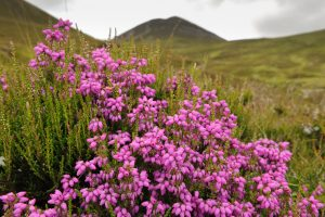UK Castle to Rent Bell Heather