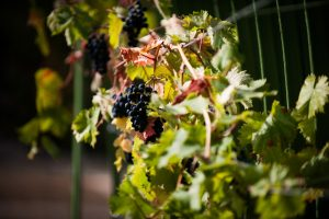 Aldourie Castle Fruit