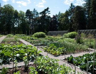 Walled Kitchen Garden