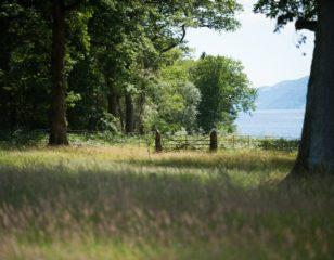 Woodlands Lake View